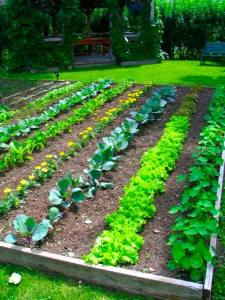 backyard-vegetable-garden