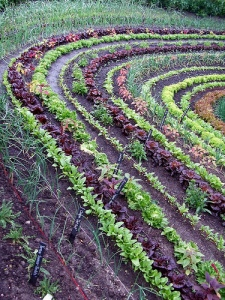 Vegetable-potager-garden-pictures